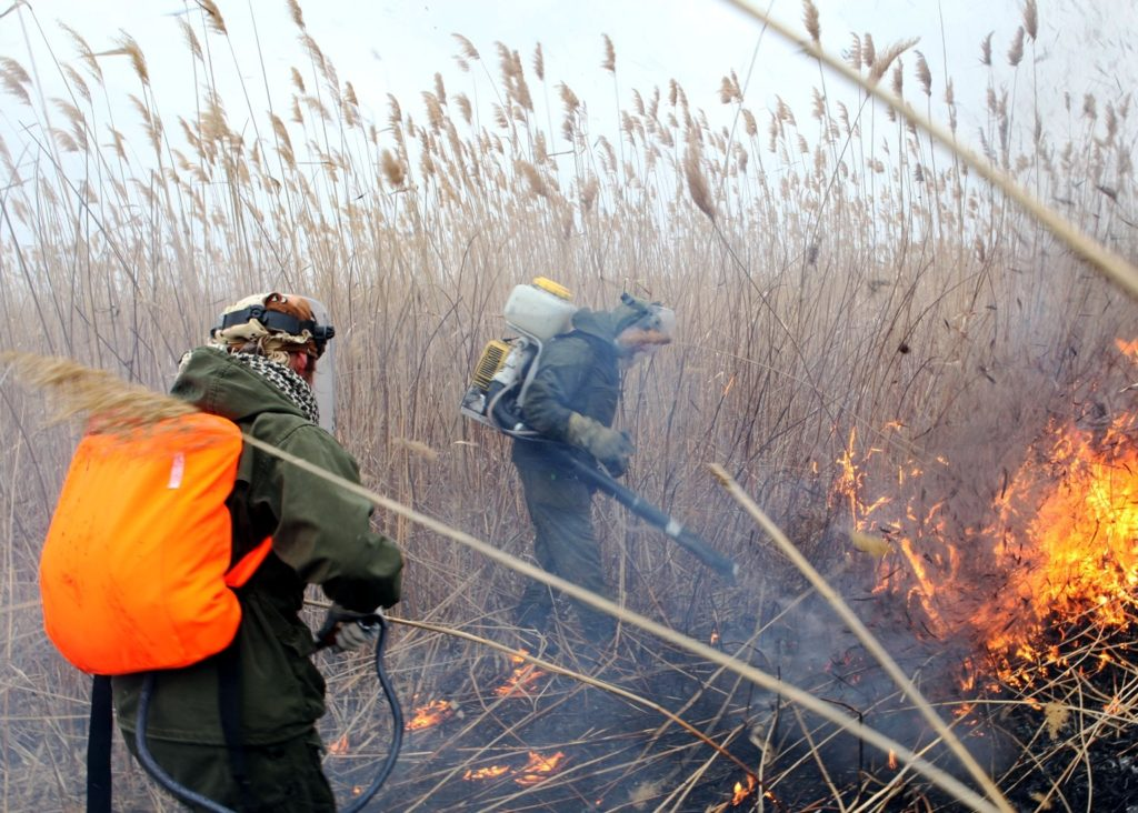 Добровольцы непосредственно участвуют в тушениях пожаров