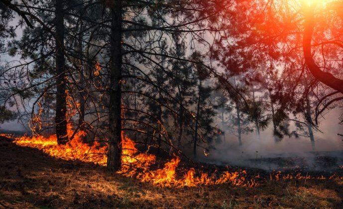 Низовое пламя устойчивого типа