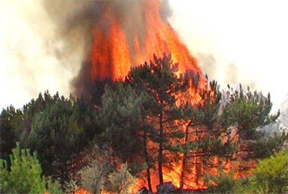 Верховой пожар в лесу