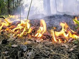 Низовой пожар сжигает все глубоко в земле